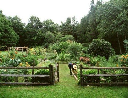 Покупка фермы и ее особенности